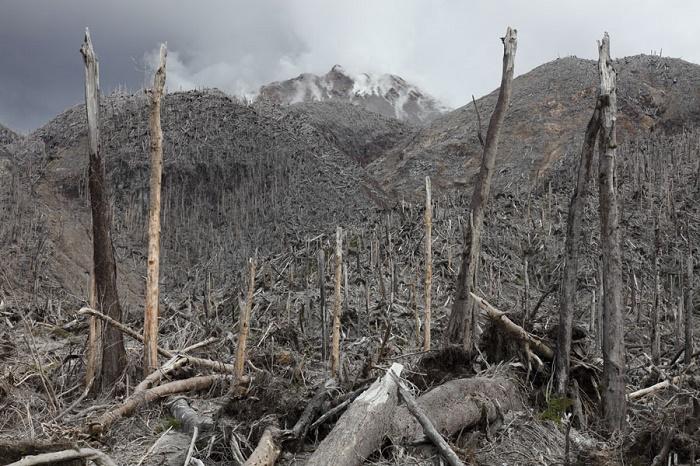 Остатки леса на склоне вулкана после схождения пирокластического потока. / Фото: bbc.com