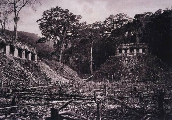 Альберт Рус увидел огромный древний город майя, пришедший в уныние. / Фото:liveinternet.ru