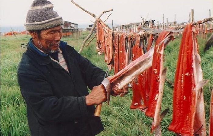 Многие северные народы вялят или сушат рыбу / Фото: culturalsurvival.org