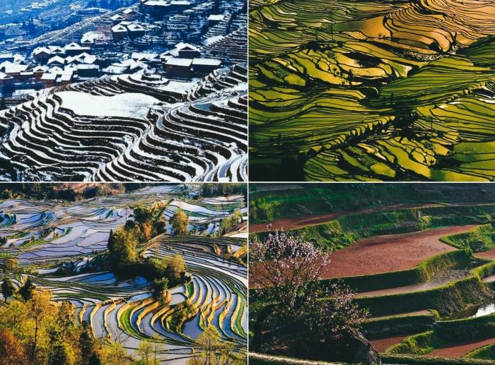 Рисовые террасы в разные времена года