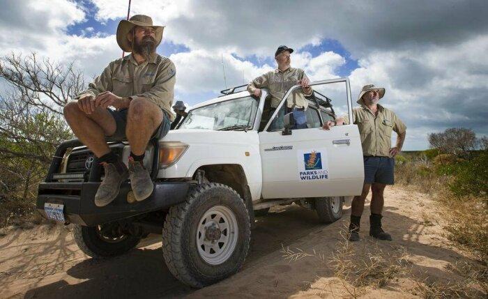 Современные рейнджеры в Австралии пользуются внедорожниками, хотя кое-где все еще удобнее передвигаться верхом / Фото: telegra.ph