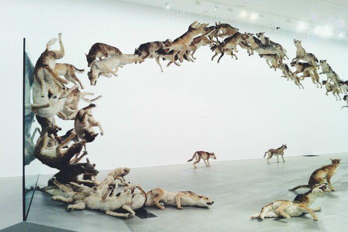 Инсталляция с волками на тему неумения вовремя останавливаться при достижении целей / Фото: and-other-things.com