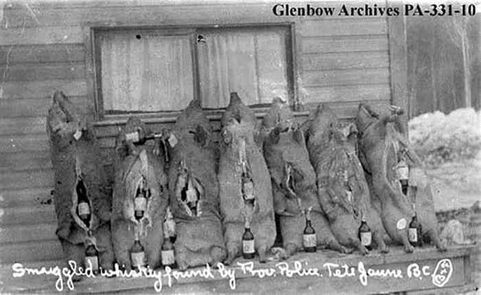 Туши свиней, которые бутлегеры набили контрабандным спиртным. 1925 год / Источник: cardstoncounty.com
