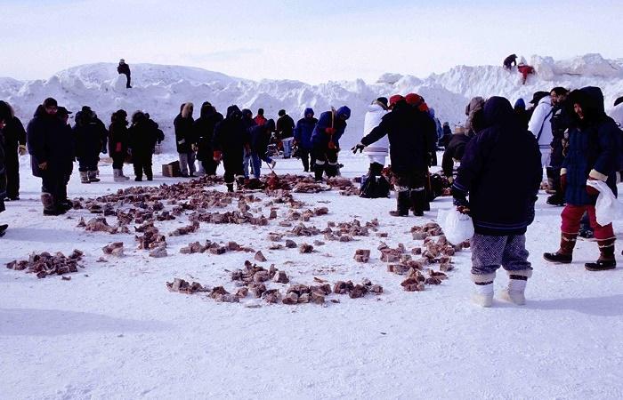 Инуиты делят копальхен между семьями. Канада, 1999 год / Фото: ncl.ac.uk