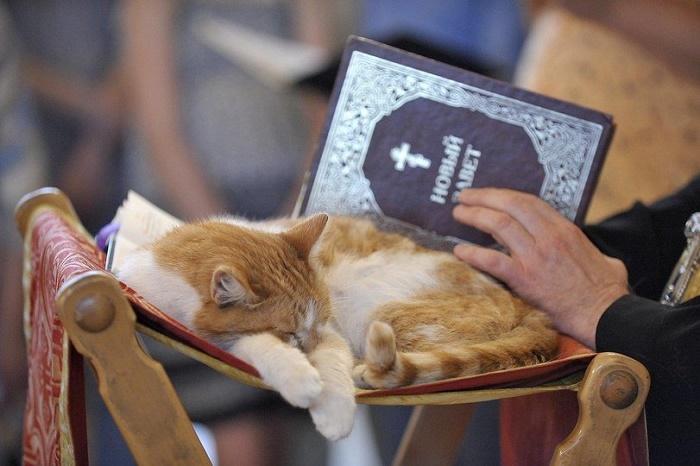 Кошки упоминаются в библейском послании пророка Иеремии / Фото: joyreactor.cc