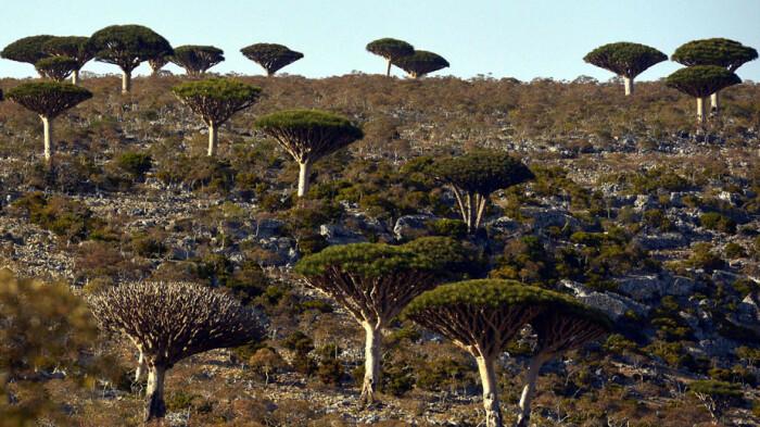Уникальная природа острова Сокотра. / Фото: aljazeera.net