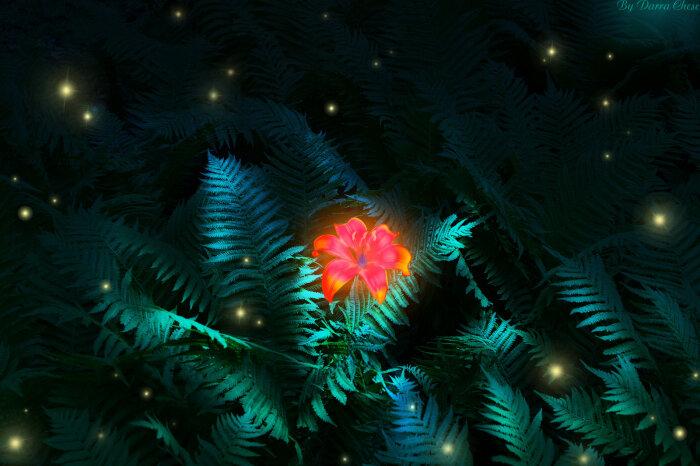 Цветок папоротника можно отыскать только в день Ивана Купалы / Фото: Рижский-рынок.рф
