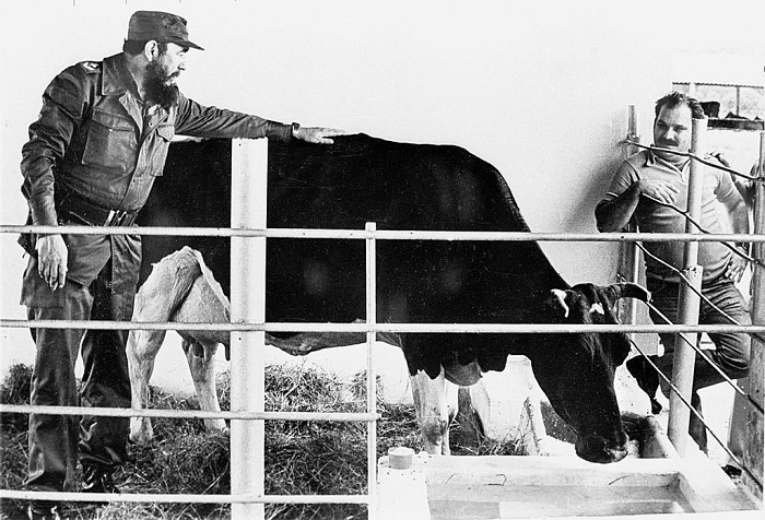 Фидель Кастро на молочной ферме / Источник: facebook.com