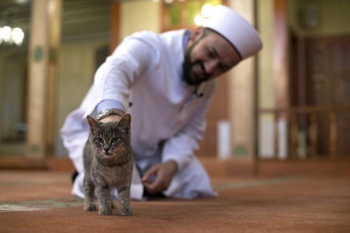 Кошки в исламе не считаются нечистыми животными / Фото: twitter.com