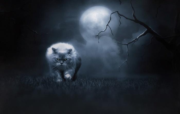 Кошки – ночные животные / Фото: goodfon.ru