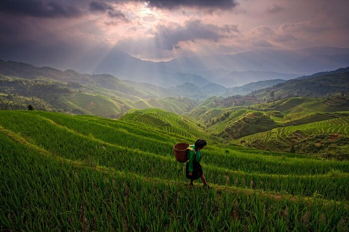 Для китайцев рис – культовый злак / Фото: loveopium.ru