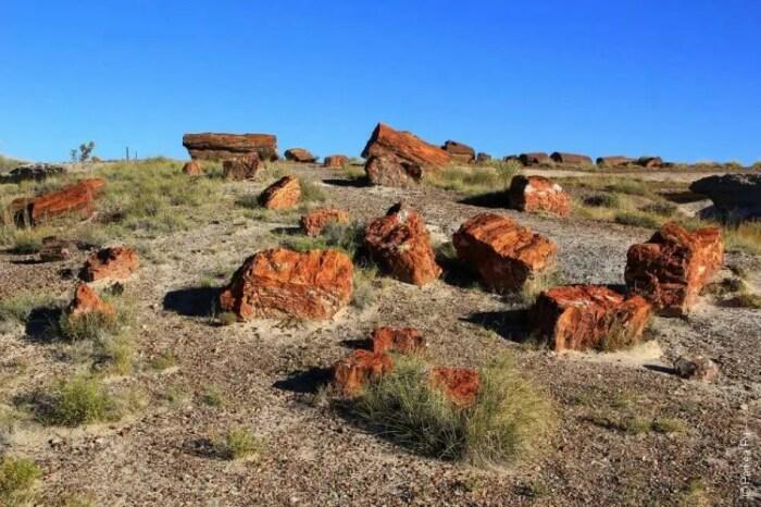 Окаменевший лес в Навахо. / Фото: paikea.ru