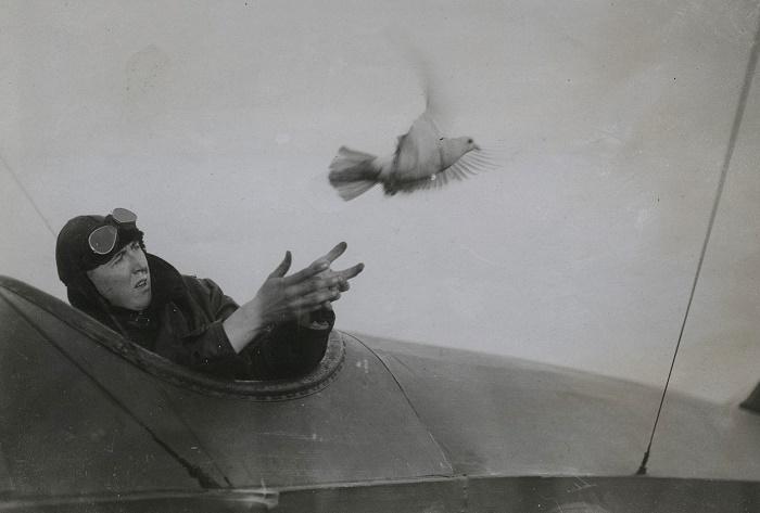 В экстренных ситуациях летчик выпускал почтового голубя. Это было своеобразным сигналом бедствия / Источник: was.media.com