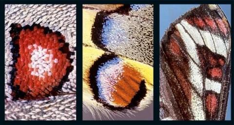 Алфавит на крыльях бабочек