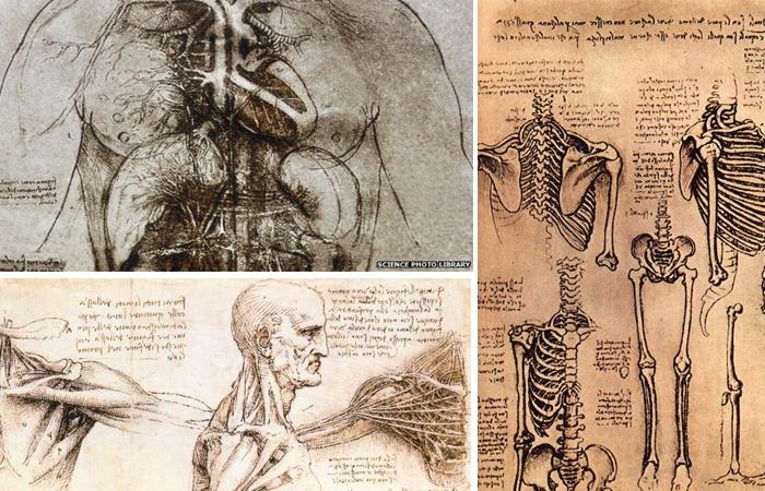 Анатомические рисунки Леонардо