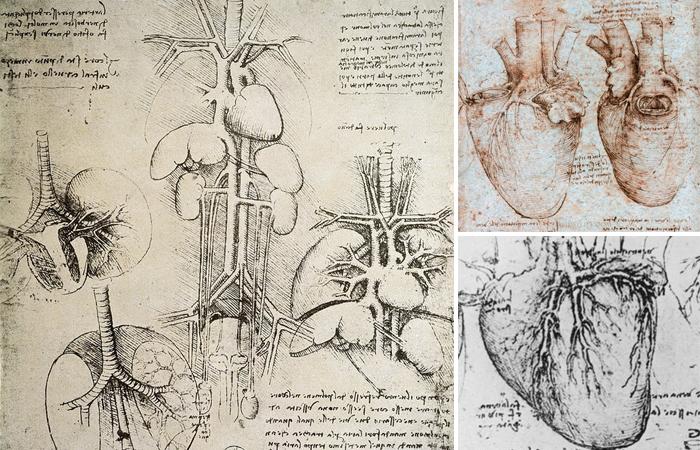 Сердце в рисунках Леонардо