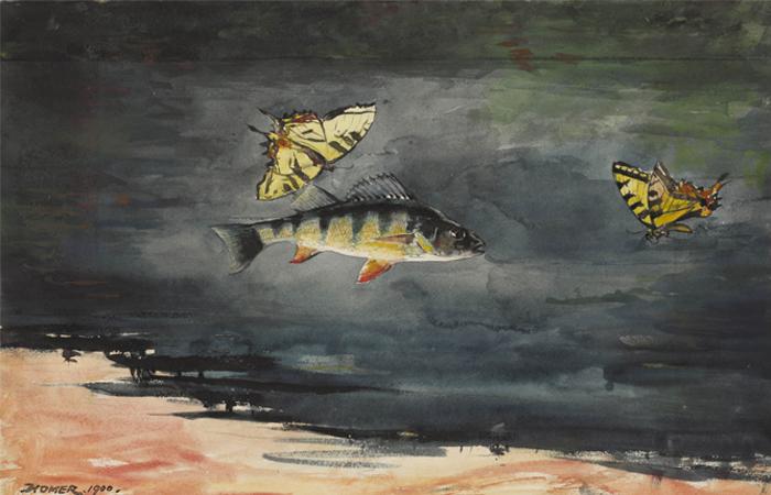 """Рыба и бабочки"""