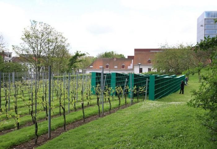Виноградник-библиотека Bookyard