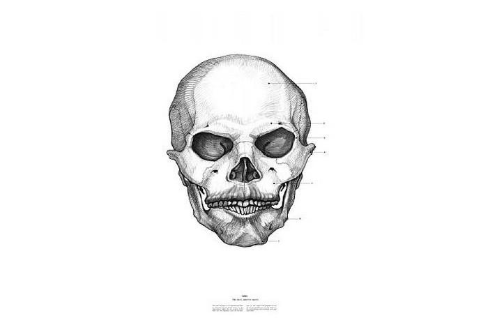 Владимир Ленин, The Anatomy of Skulls, Istvan Laszlo