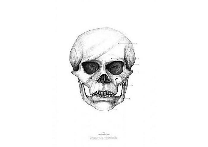 Энди Уорхолл, The Anatomy of Skulls, Istvan Laszlo