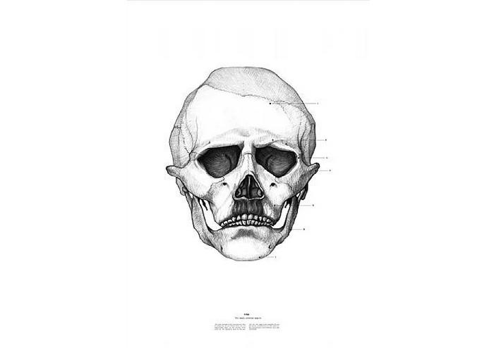 Адольф Гитлер, The Anatomy of Skulls, Istvan Laszlo