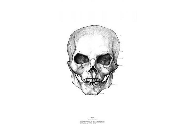 Майкл Джексон, The Anatomy of Skulls, Istvan Laszlo