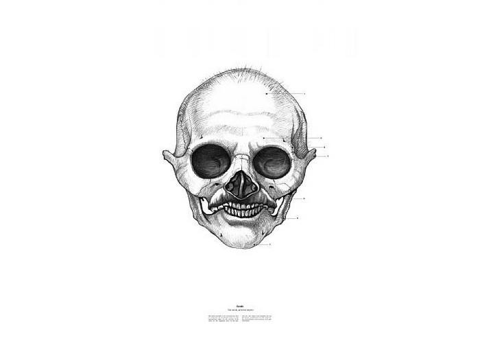 Махатма Ганди, The Anatomy of Skulls, Istvan Laszlo