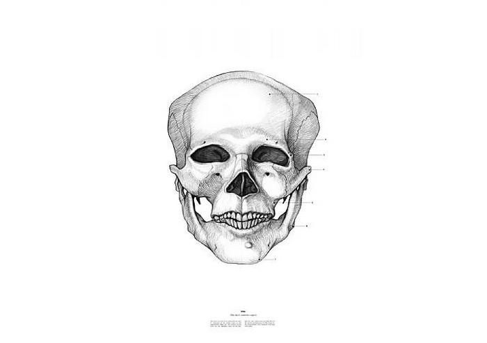 Мао Цзе Дун, The Anatomy of Skulls, Istvan Laszlo