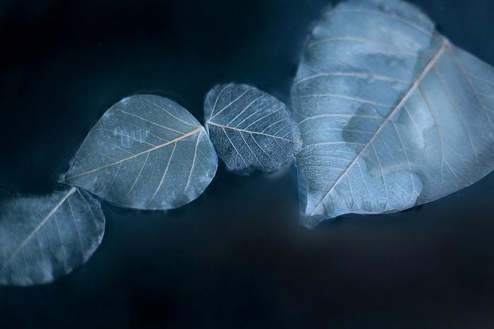 Obon – тысячи светящихся листьев в Пуэрто-Рико от Мии Андо (Miya Ando)