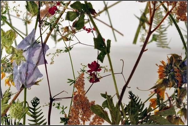 Объемные скульптуры из сухих листьев и цветков