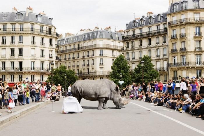 Attraction – сосуществование людей и животных в серии фотографий от Рено Мариона (Renaud Marion)