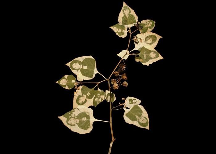 Фотографии, напечатанные хлорофиллом. Работы Бинь Данха (Binh Danh)