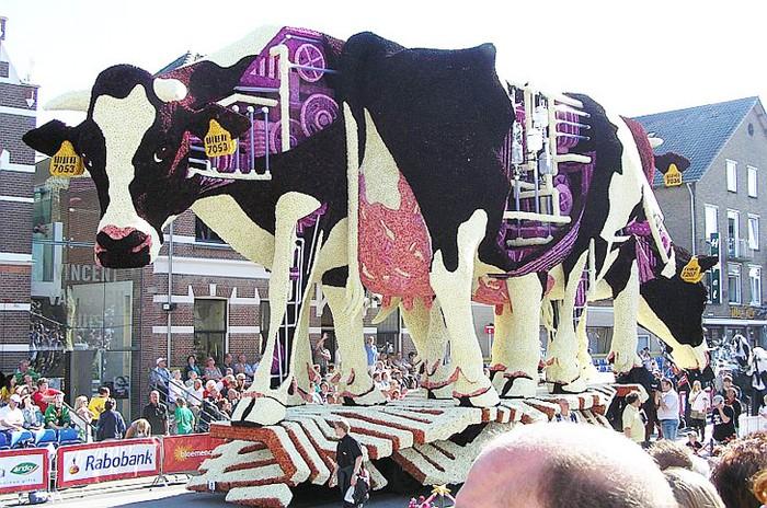 Bloemencorso — масштабный фестиваль георгинов в Нидерландах
