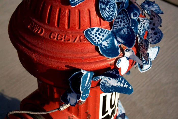 Синие бабочки на улицах американских городов. Творчество Таши Льюис (Tasha Lewis)