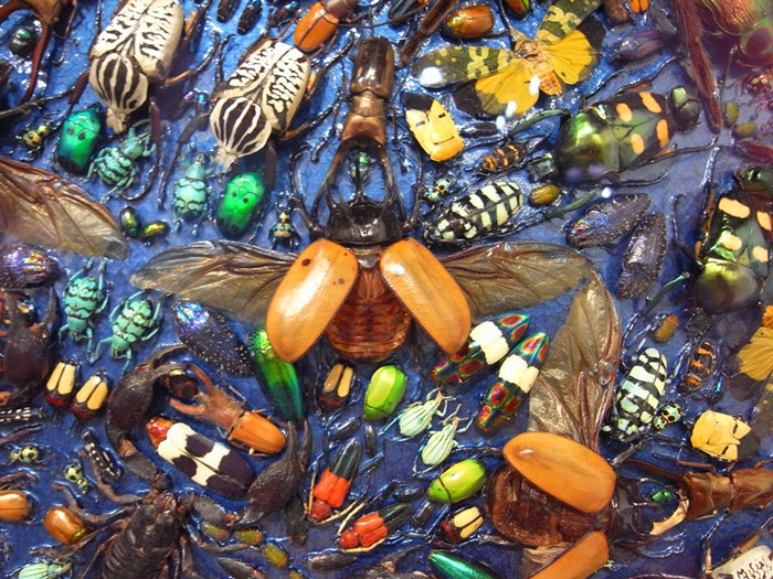 Capaneus — картина из насекомых от Дэмьена Херста