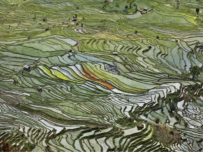 Рисовые террасы в Чили. Выставка Water от Эдварда Буртынского (Edward Burtynsky)