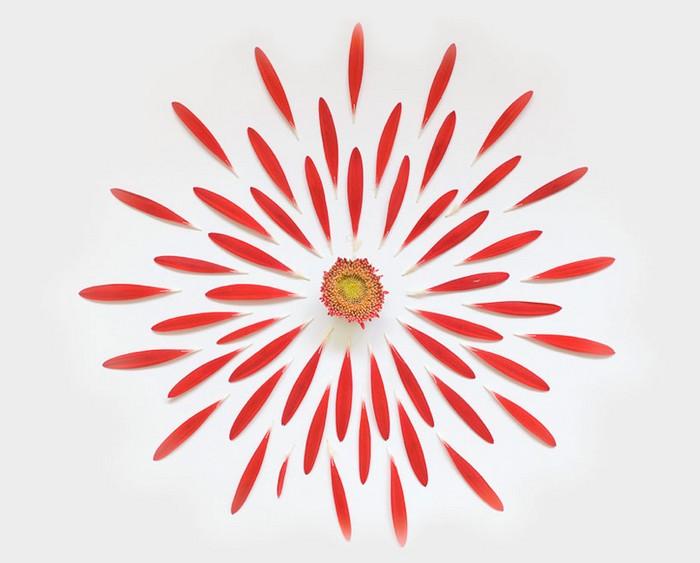 Цветочное бомбометание в проекте Exploded Flowers от Фонг Ци Вея (Fong Qi Wei)