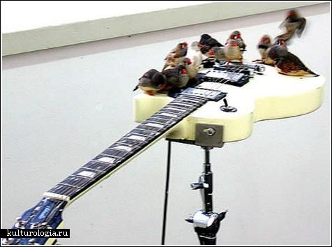 Новый музыкальный коллектив: «The Зяблики»