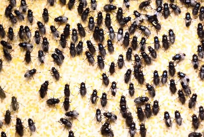 Made in Los Angeles: картины, нарисованные мухами. Творчество Джона Кнута (John Knuth)