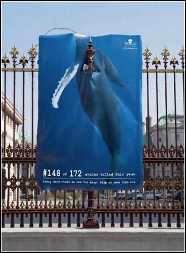 Сто семьдесят два мертвых кита на улице в Вене