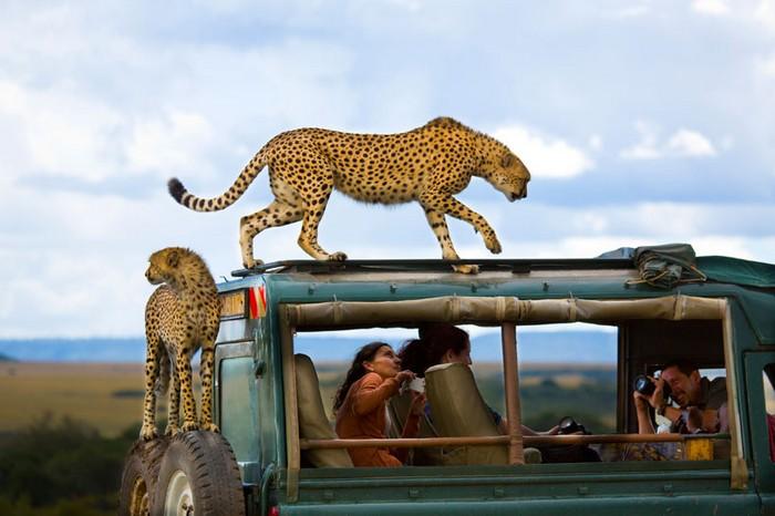 Фотография Say Cheese от Янаи Бонне (Yanai Bonneh). Конкурс 2013 Traveler Photo Contest от National Geographic