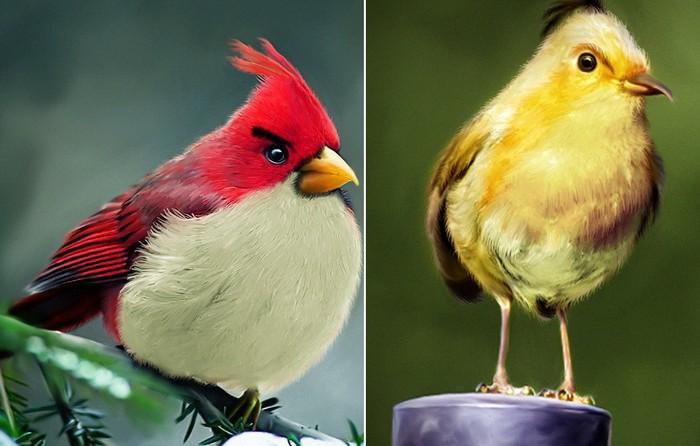 Живые Angry Birds от Мохамеда Рауфа (Mohamed Raoof)