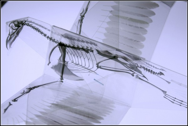 Прозрачные оригами с экологическим намеком от Такаюки Хори (Takayuki Hori)