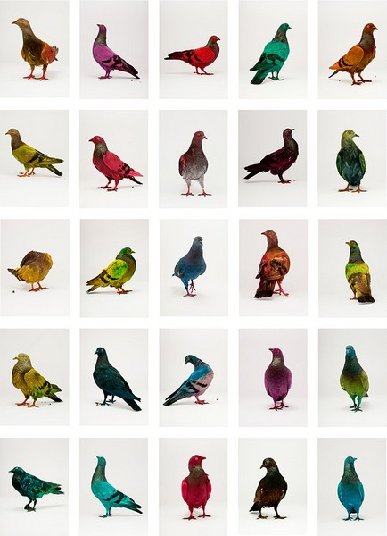 Цветные голуби в акции Some pigeons are more equal than others от Джулиана Шарьера (Julian Charriere) и Юлиуса фон Бисмарка (Julius von Bismarck)