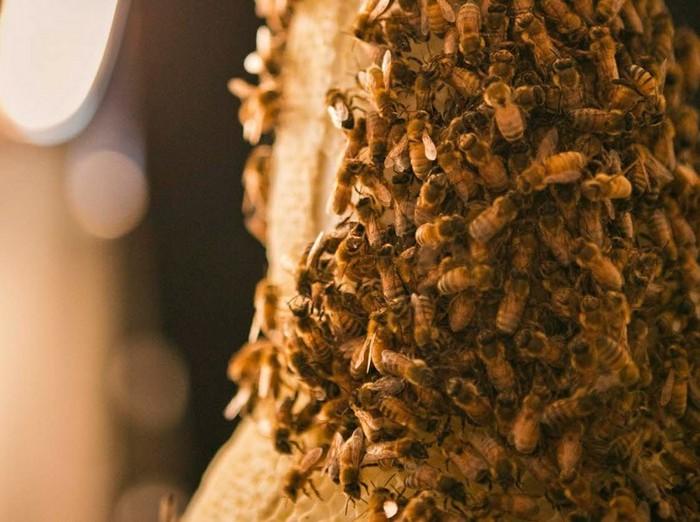 3B – трехмерная печать при помощи пчел. Необычная реклама Dewar's Whisky