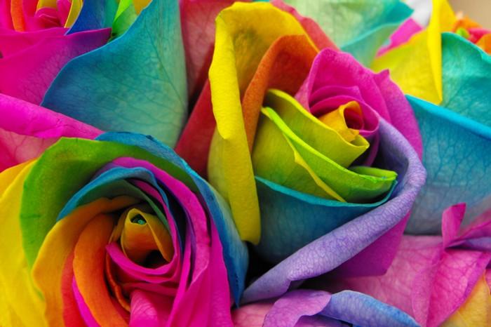Разноцветная роза Rainbow Rose: чудо, созданное пищевыми красителями