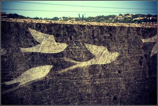 Flight 101: граффити наоборот в Южной Африке