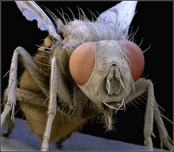 Гигантские насекомые от Стива Гшмейсснера (Steve Gschmeissner)»