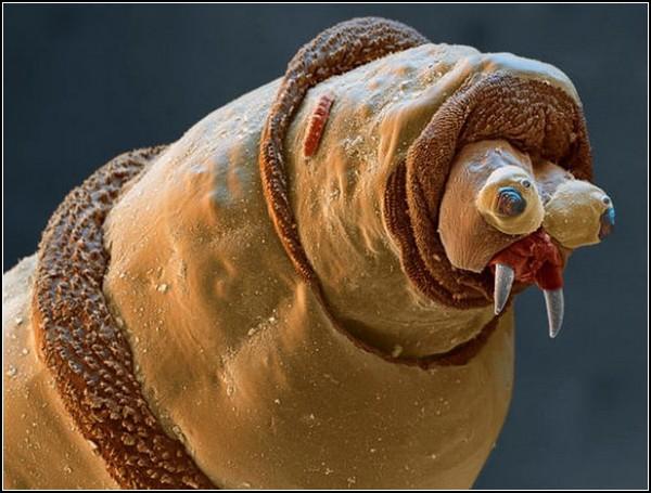 Гигантские насекомые от Стива Гшмейсснера (Steve Gschmeissner)