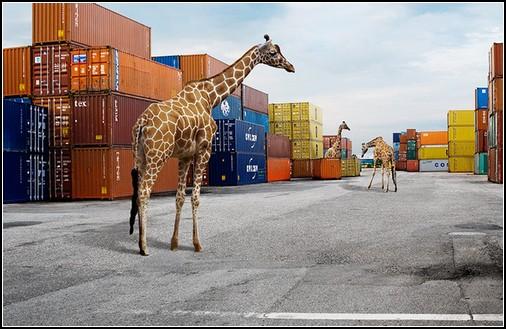 Животные в городе. Фотопроект Йохана Розенмунте (Johan Rosenmunthe)